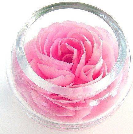 Розовый настой
