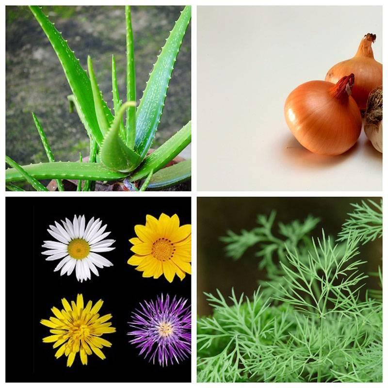 Лечебные овощи и травы